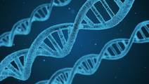 Number of Genetic Markers Linked to Lifespan Triples