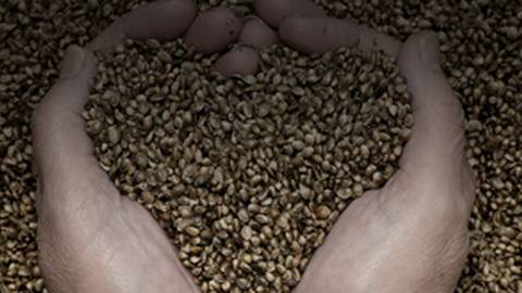 Seeds: The Nutritional Powerhouses We Don't Consume Enough