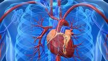 Cardiac Stem Cells from Young Hearts could Rejuvenate Old Hearts