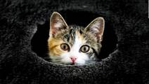 Cats Don't Cause Mental Health Problems, Study Says