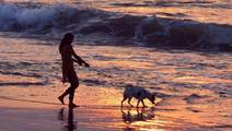 Reeling under Mental Trauma? Adopt a Pet