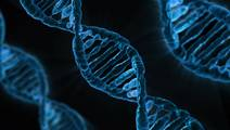 Researchers identify genes linked to the effects of mood and stress on longevity