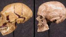 Neanderthal Dental Plaque could Reveal How They Lived and Ate