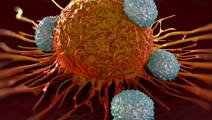 Control of immune response relies on a key protein, study finds