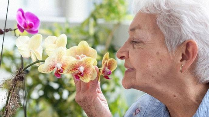 Lacking the Acute Sense of Smell is Associated with Dementia