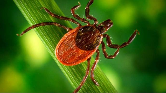 Lyme Disease Is On The Move