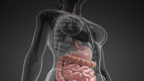 Reprogramming the Digestive System: Where Traditional and Integrative Therapies Merge