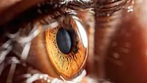 Stem Cells Could Restore Vision After Eye Disease