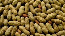 Drugs Trial Hope for Peanut Allergy Sufferers at Risk of Fatal Reaction