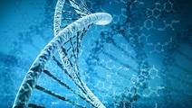 Study Links 26 Novel Genes to Intellectual Disability