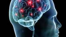 Forty More Genes for Intelligence Discovered